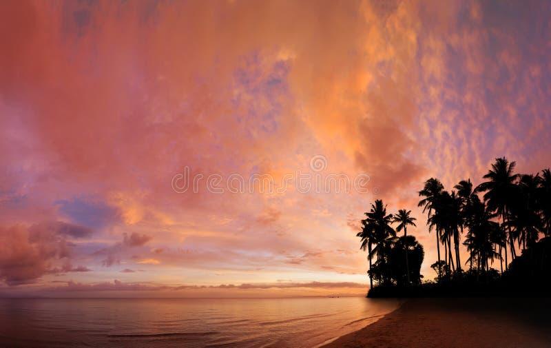 Plage tropicale avec l'arbre de noix de coco photographie stock