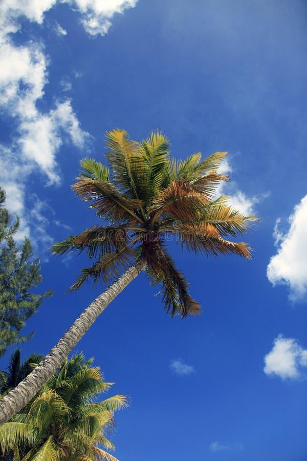 Plage tropicale avec la paume photographie stock