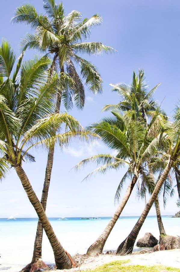 Plage tropicale avec la paume photo stock