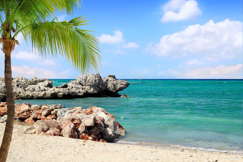 Plage tropicale avec le palmier images libres de droits