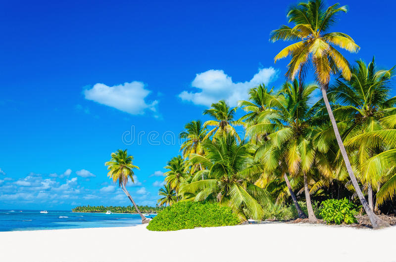 Plage tropicale avec le palmier entrant dans l'océan images stock