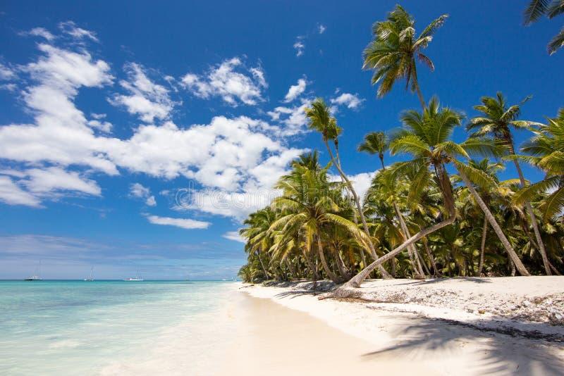 Plage tropicale avec les palmiers et le sable blanc sur l'île de Saona photographie stock
