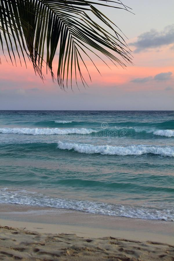 Plage tropicale barbados images stock