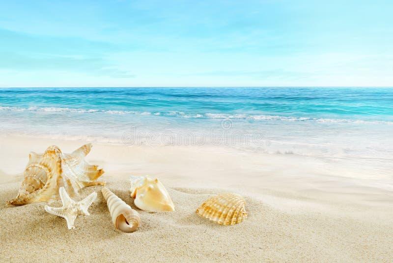 Plage tropicale Coquilles sur le sable images libres de droits