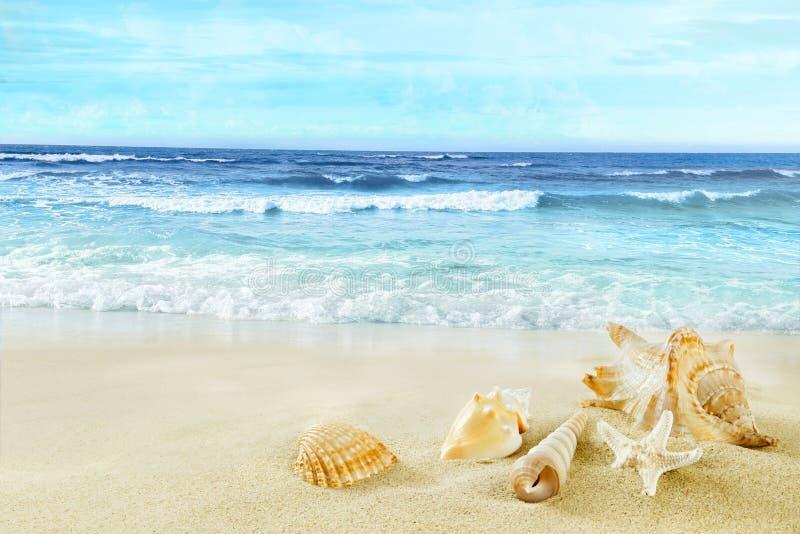 Plage tropicale Coquilles sur le sable image stock