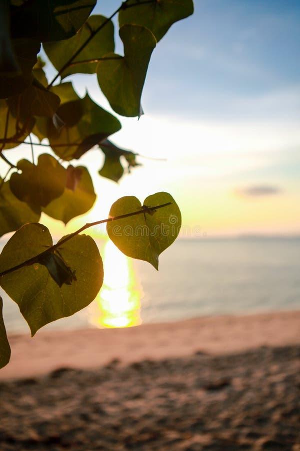 Plage tropicale de coucher du soleil Beau fond photo stock