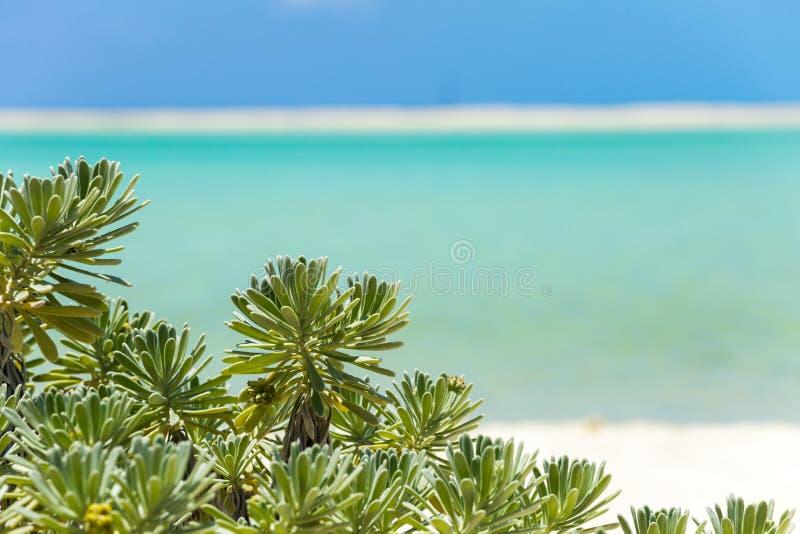 Plage tropicale en île de Cayo Largo image libre de droits