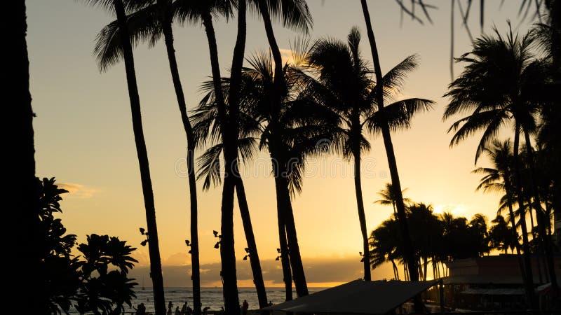 Plage tropicale en Hawaï photographie stock libre de droits