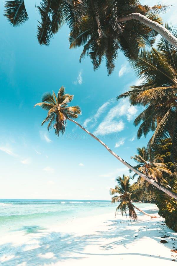 Plage tropicale en Seychelles photo libre de droits