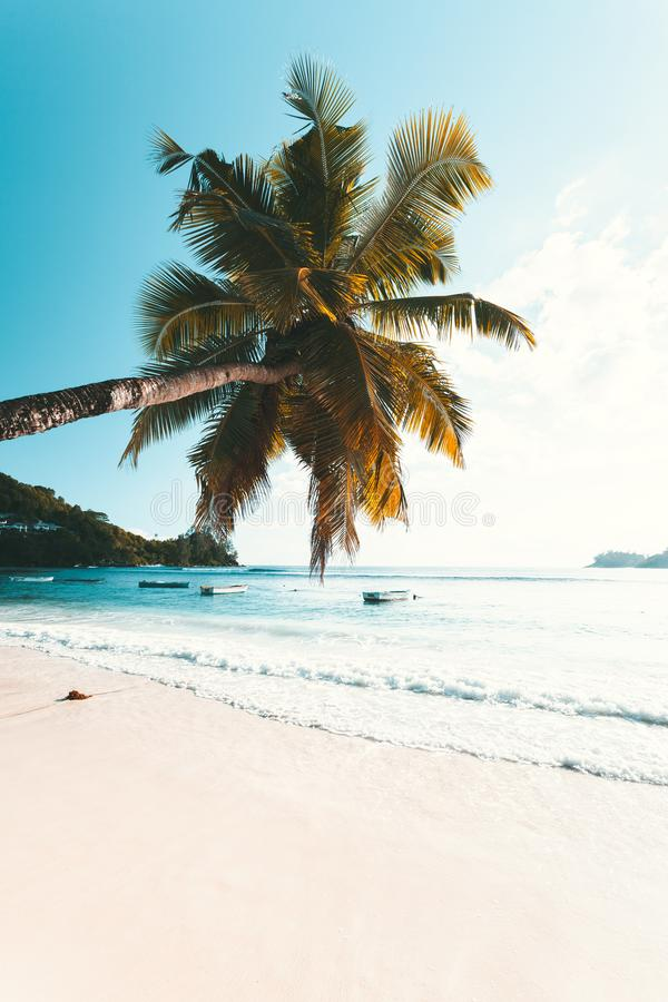 Plage tropicale en Seychelles image stock