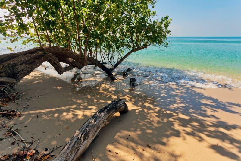 Plage tropicale exotique images libres de droits