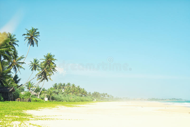 Plage tropicale intacte dans Sri Lanka Belle plage avec personne, les palmiers et le sable d'or Mer bleue Fond d'été image libre de droits