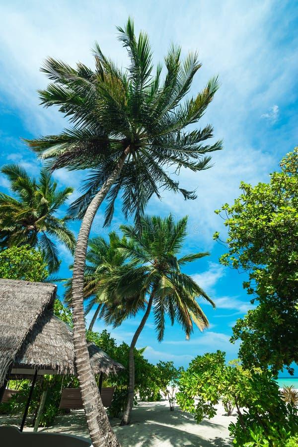 Plage Tropicale Parfaite De Paradis D île Photo stock