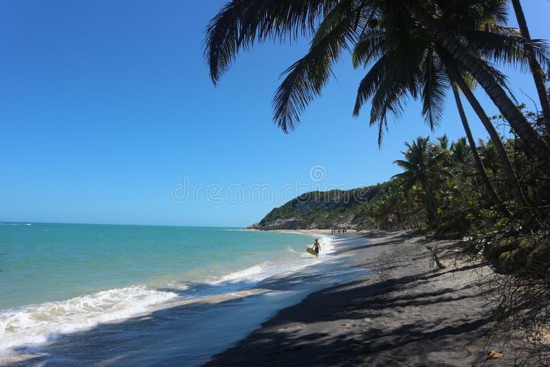 Plage tropicale parfaite - Sun et palmiers photographie stock