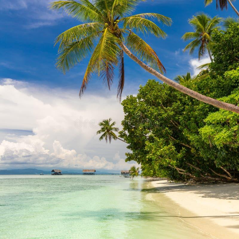 Plage tropicale personne Vue de plage tropicale de paradis avec des cocotiers images libres de droits