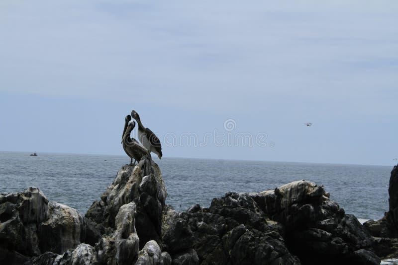 Plages de Valparaiso, Vina Del Mar, Chili photographie stock libre de droits