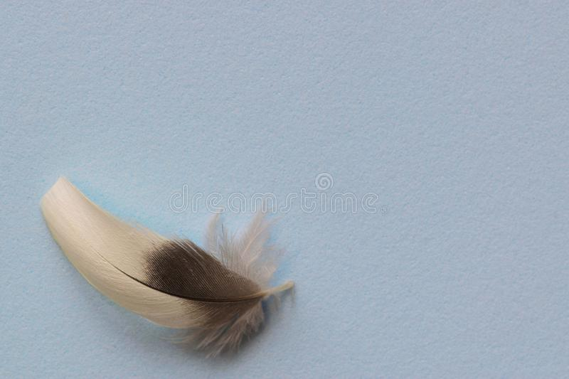 Plain blue background with a single feather. Solid plain blue background with a single gray and white feather in the bottom left corner, leaving room for text royalty free stock photography