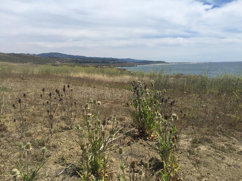 Plaine côtière la Californie du sud avec des wildflowers et des vues d'océan image stock