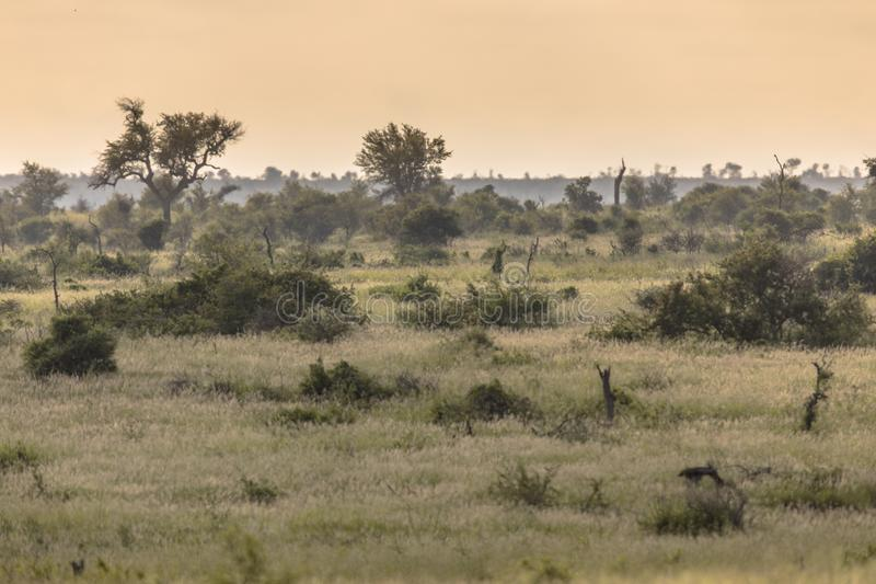 Plaine de Savanna bushveld photographie stock