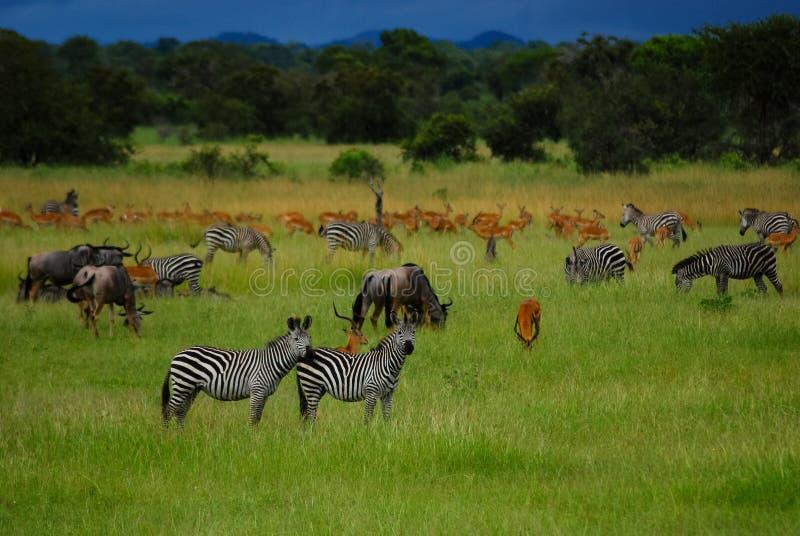 Plaines de l'Afrique photographie stock