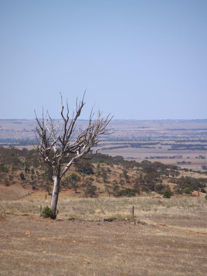 Plaines mortes d'arbre photo stock