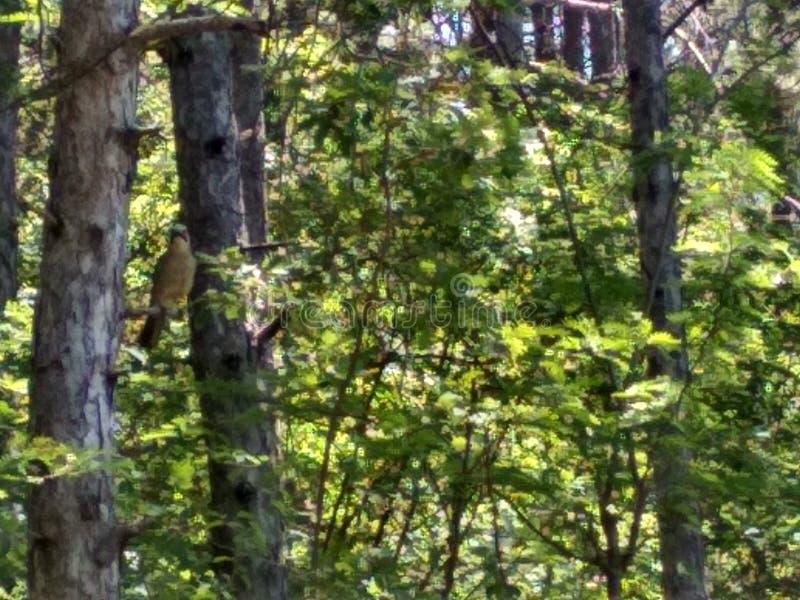 plaisirs de forêt photographie stock libre de droits