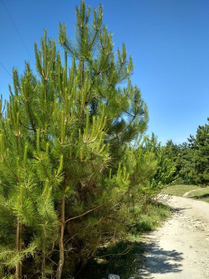 plaisirs de forêt photos stock