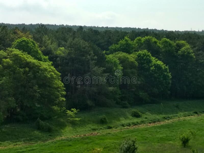 plaisirs de forêt image libre de droits