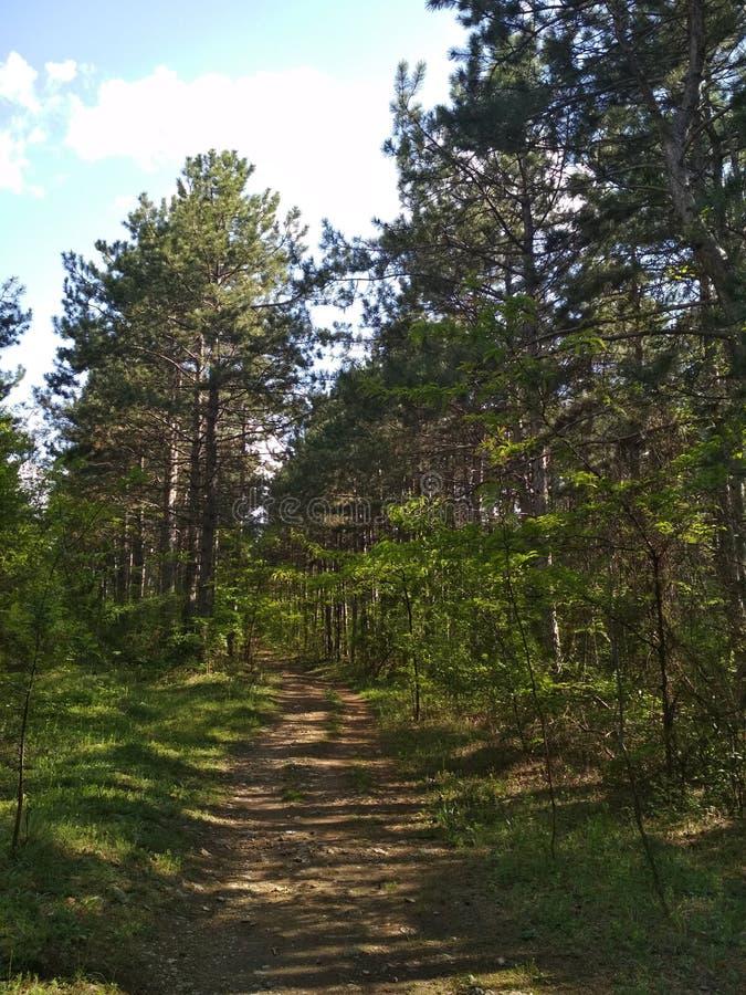 plaisirs de forêt images stock