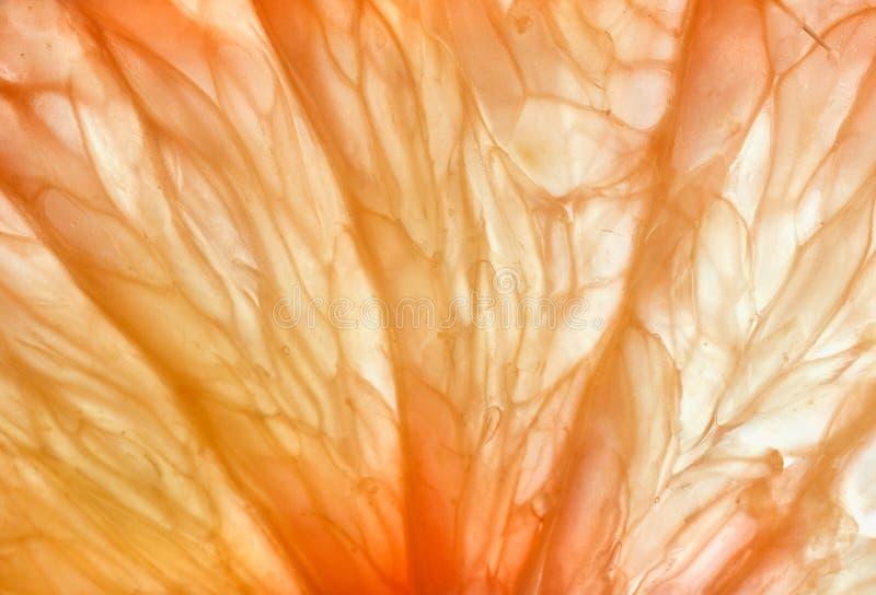 Plak van Grapefruit royalty-vrije stock foto