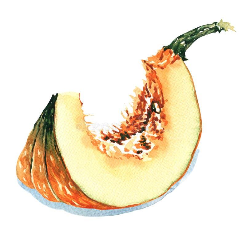 Plak van rijpe oranje pompoen op een witte achtergrond royalty-vrije illustratie