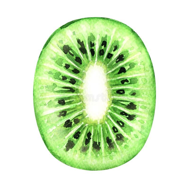 Plak van vers die kiwifruit op witte achtergrond wordt geïsoleerd stock fotografie
