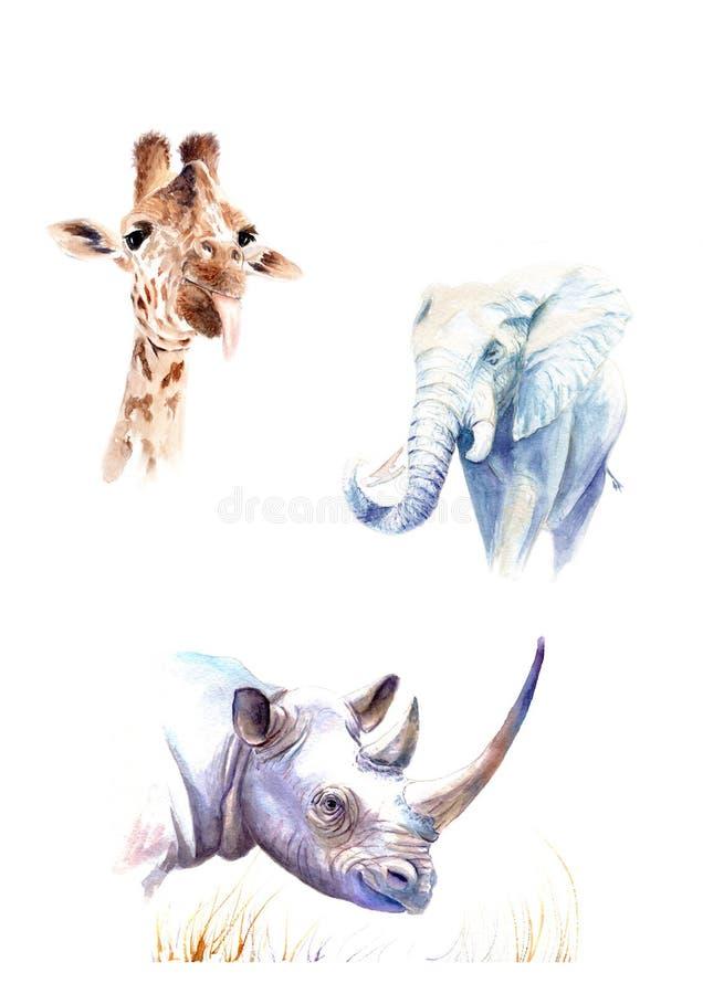 Plakat mit Aquarellzeichnungen Wilde Tiere: Elefant, Giraffe, Nashorn stock abbildung
