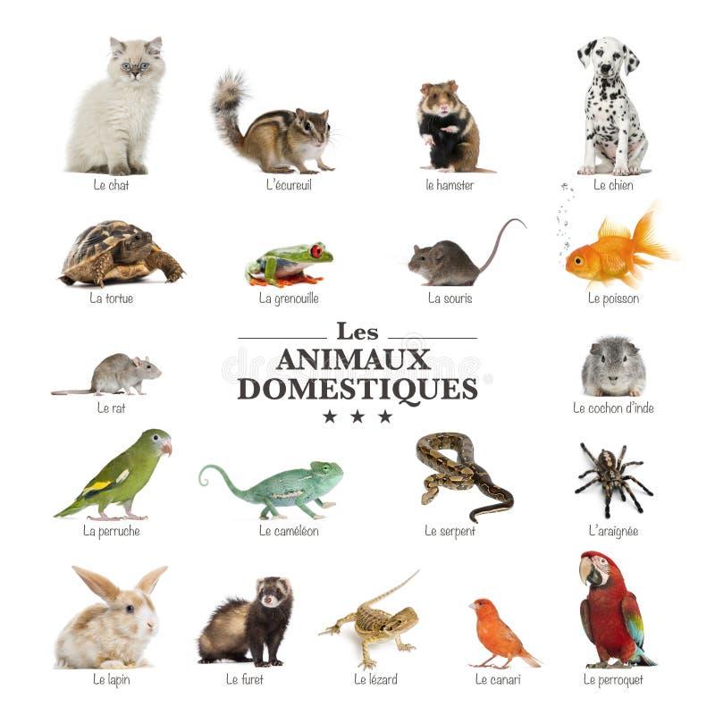 Plakat zwierzęta domowe w francuskim zdjęcia stock