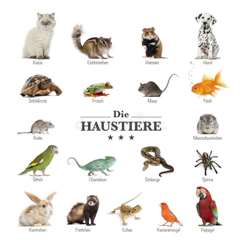 Plakat zwierzęta domowe w niemiec obrazy royalty free