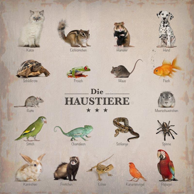 Plakat zwierzęta domowe w niemiec obrazy stock