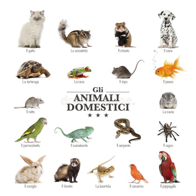 Plakat zwierzęta domowe w włochu obrazy stock