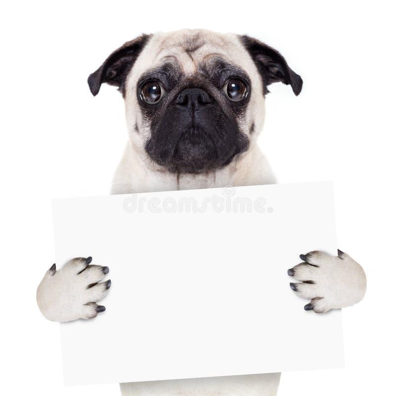 Plakatfahnenhund stockbilder