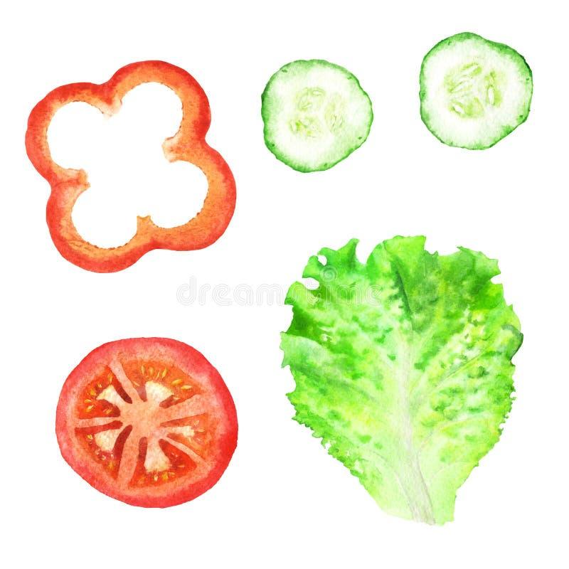 Plakken van tomaat, paprika, komkommer en blad van sla voor sandwich De illustratie van de waterverf vector illustratie