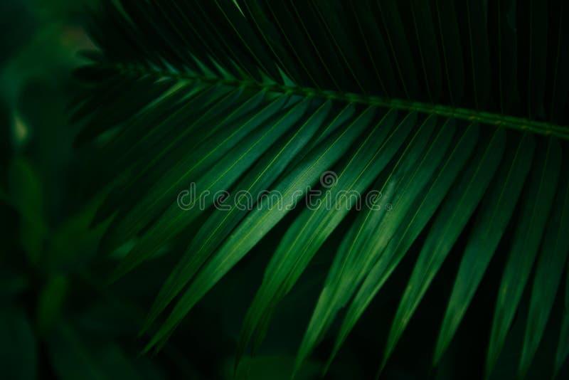 Plam deixa o teste padrão verde natural no fundo escuro - folha bonita na selva tropical da planta da floresta imagens de stock royalty free