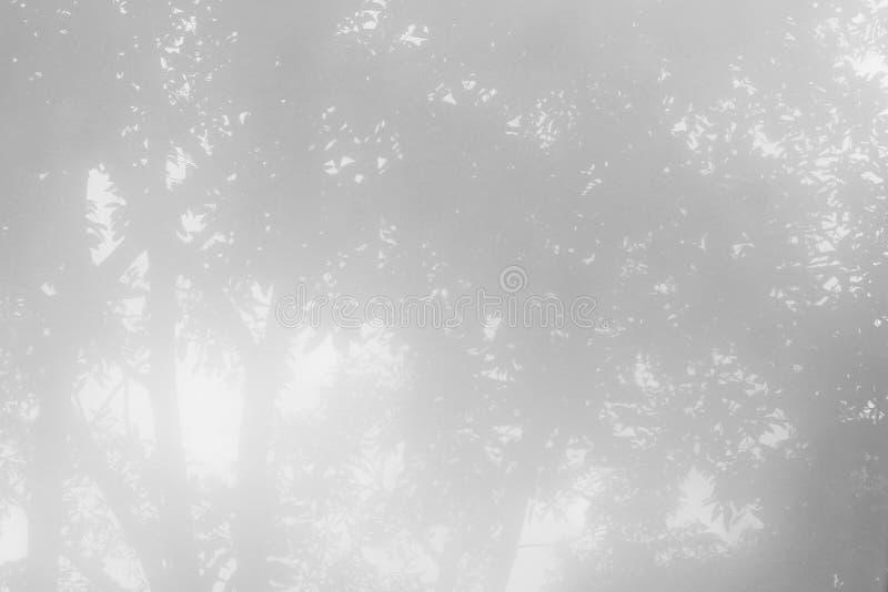 Plama drzewny cień obrazy stock