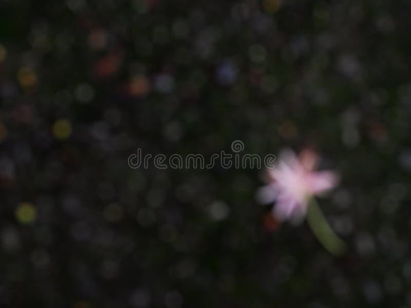 Plama kwiaty spada na ciemnozielonej mech podłoga obrazy royalty free