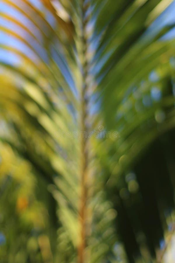 Plama wizerunek palmy gałąź obraz royalty free