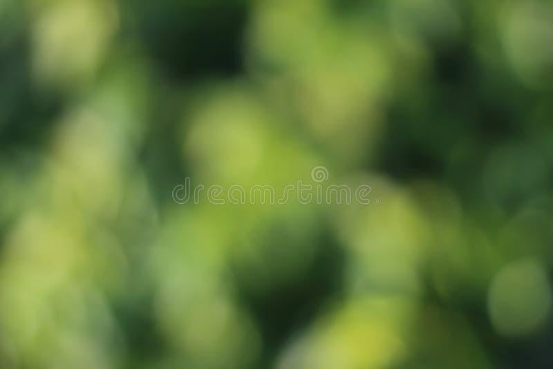 Plama wizerunek zielony krzak obrazy royalty free