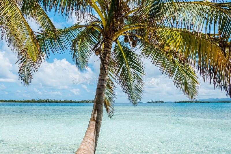 Plamboom met strand en oceaanachtergrond royalty-vrije stock afbeelding