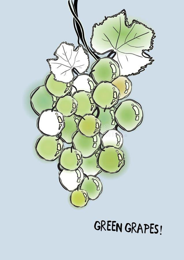 Plamy i konturu zieleni winogrona ilustracja wektor
