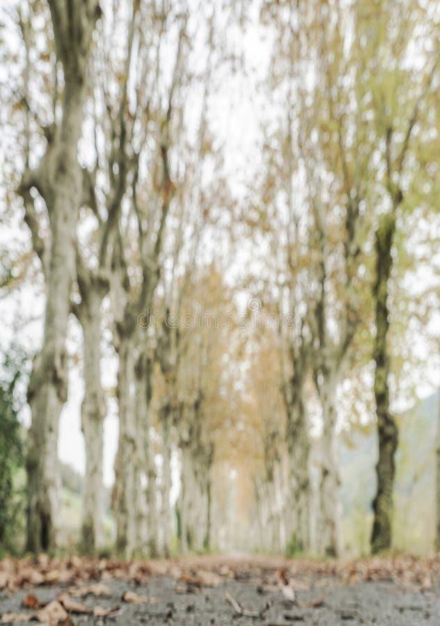 Plamy jesieni tło zdjęcia stock
