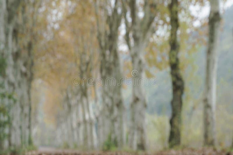 Plamy jesieni tło obraz royalty free