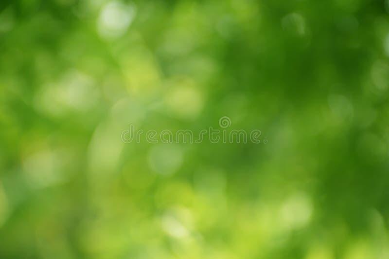Plamy ostrości zieleni natury tło fotografia stock