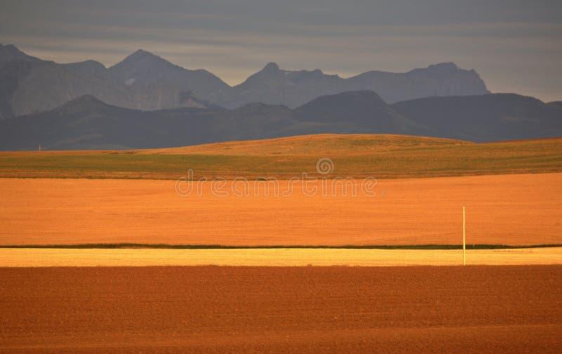 Planícies elevadas de Alberta foto de stock